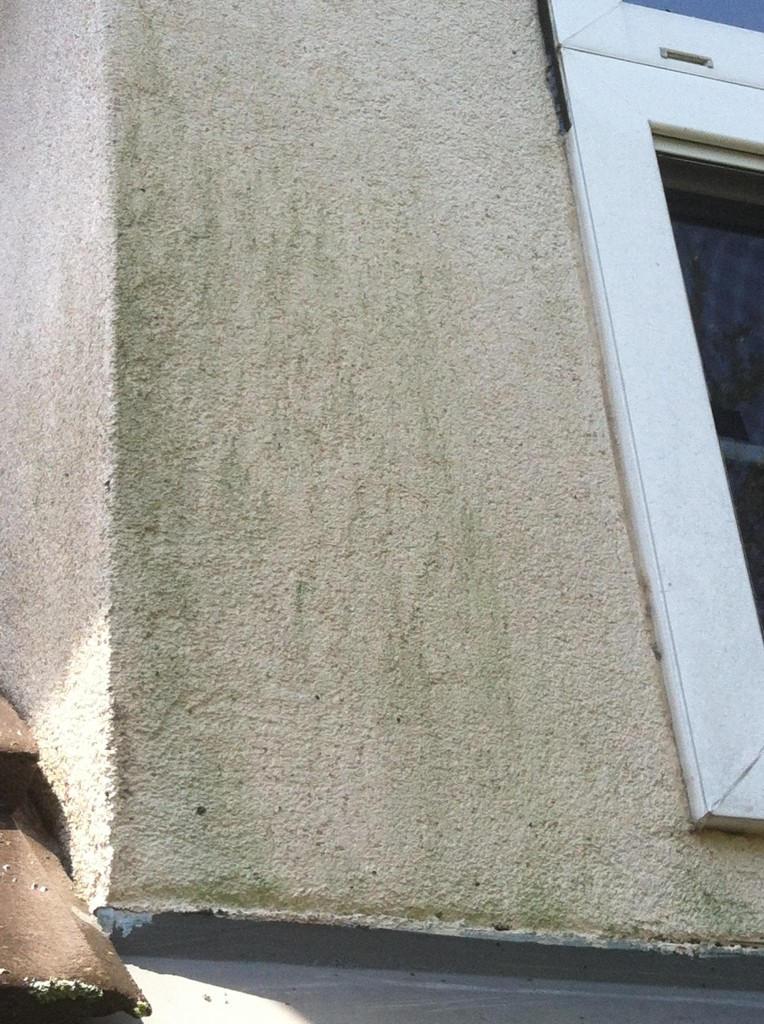 Mold had grown on this soft stucco that is in low light conditions most of the day.